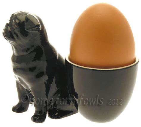 pug farm uk pug with egg cup home farm fowls