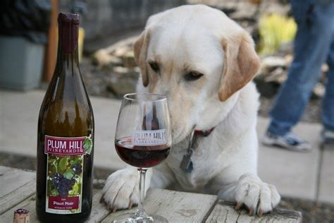 puppy wine a pet friendly weekend in the tualatin valley tualatin valley