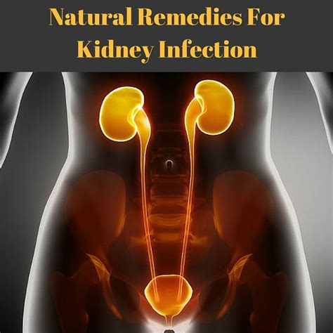 remedies for kidney infection the o