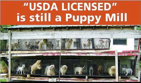 usda puppy mills puppy mill laws dahna bender