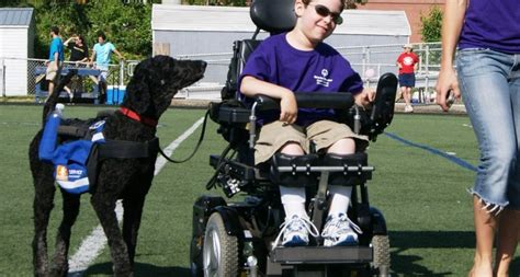 how to a mobility service mobility service dogs autism service dogs
