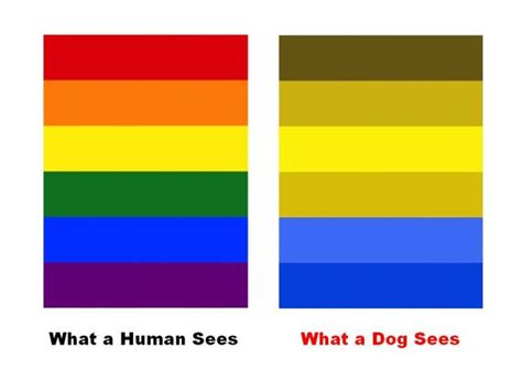 how do dogs see color do dogs actually use color vision psychology today