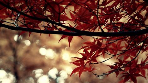 meaning of themes in computer autumn beautiful computer desktop wallpaper 47873 green
