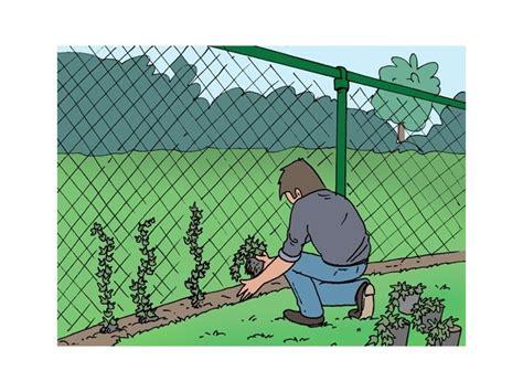 Planter Lierre Grimpant by Planter Un Lierre Cl 244 Ture Livios