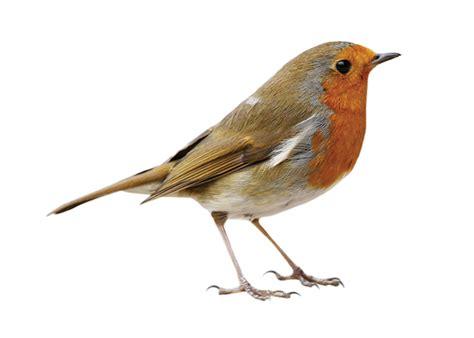 Birdness a semiotic analysis
