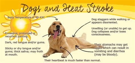 heat stroke in dogs keeping your pets safe on those summer days tv tech geeks news