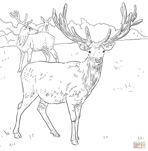 coloring pages of mule deer mule deer coloring page coloring home