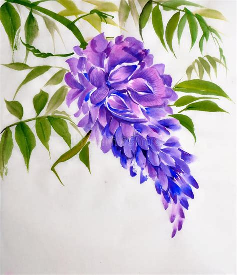 clipart fiore fiore di glicine illustrazione di stock illustrazione di