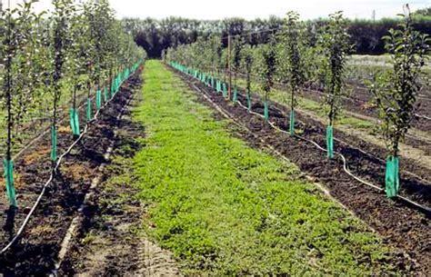 drip irrigation – apples and pears – te ara encyclopedia