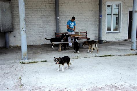 puppies of chernobyl dogs of chernobyl clean futures fund