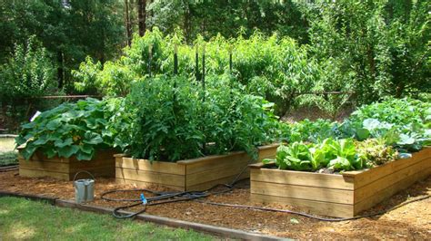 Edibles Natural Learning Initiative Vegetable Garden Care