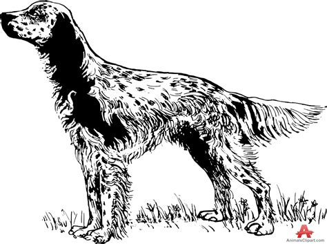 Setter Dog Drawing | english setter clipart clipground