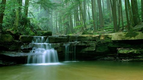 forests green landscapes maryland nature wallpaper