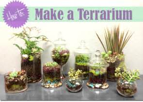 how to make a terrarium and celebrate your earthy side thegoodstuff