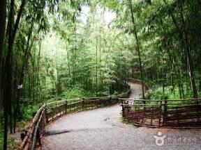 juknokwon bamboo garden 죽녹원 official korea tourism