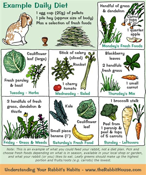 vegetables a rabbit can eat your rabbit s diet plants vegetables fruit