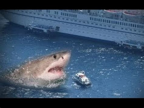 megalodon recent sightings real megalodon biggest shark ever proofs genuine