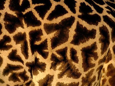 animal pattern artwork animal pattern photos picture gallery desktop wallpaper