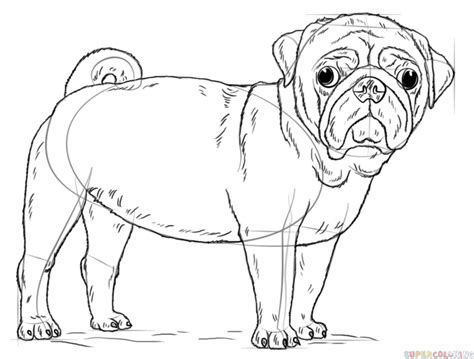 pug line drawing pug line drawing pictures to pin on pinsdaddy
