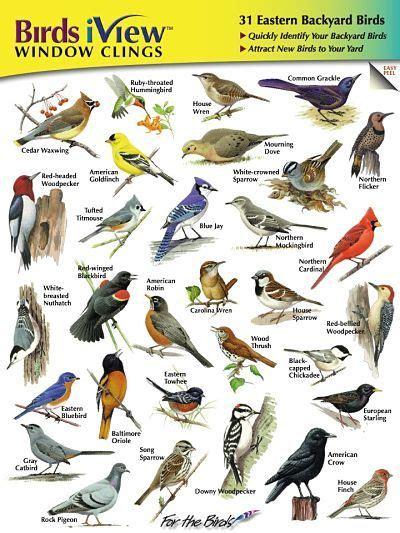 common backyard birds outdoor goods