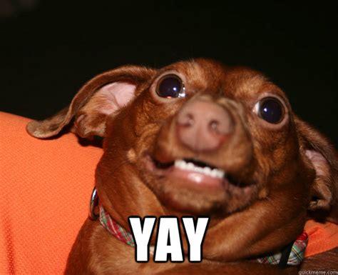 Yay Meme Face - yay dog memes quickmeme