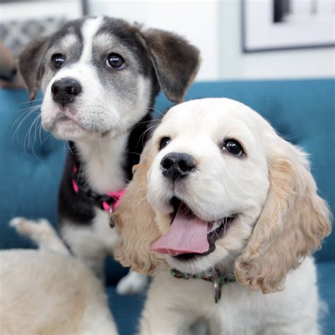 puppy bowl dogs dogs at the puppy bowl 2015 popsugar pets