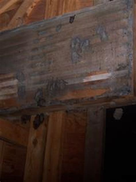 Scratching Noise In Ceiling by Bat Removal From Attic Bat Extermination Michigan Bat
