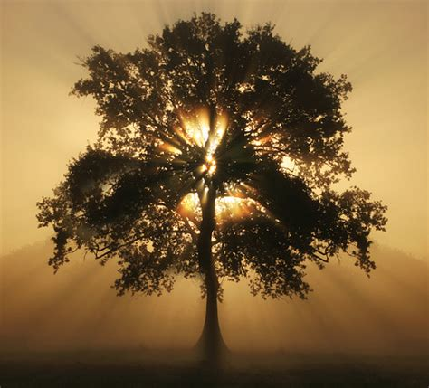 tree of light flickr photo sharing