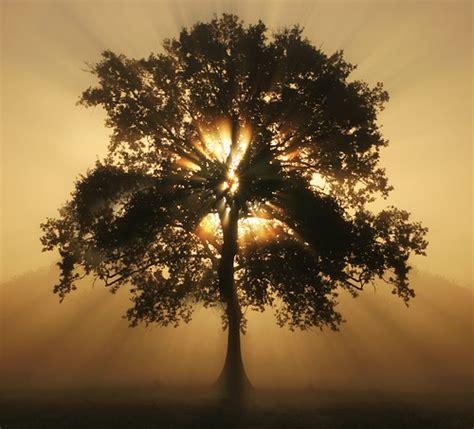 light tree tree of light flickr photo