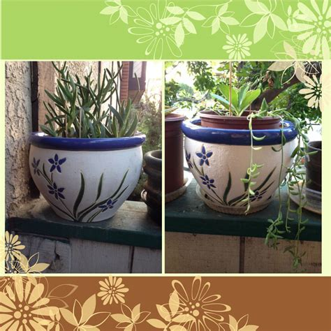 pack flower pots     rite aid cost