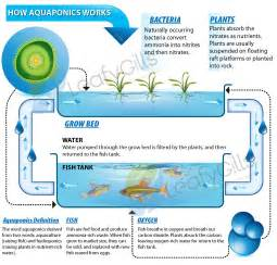 Aquaponics Vertical Garden - aquaponics diagram employ an experienced carpenter intended for your woodworking projects