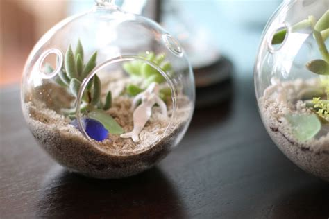 making it lovely how to make a succulent sea terrarium making it lovely
