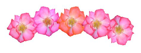 Cheerful Fantasia Flowercrown Flower Crown flower crown png deviantart