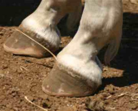 healthy hoof solutions for barefoot performance