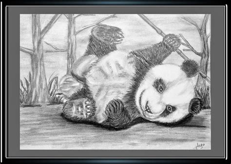 imagenes a lapiz de osos pandas para dibujar a lapiz imagui