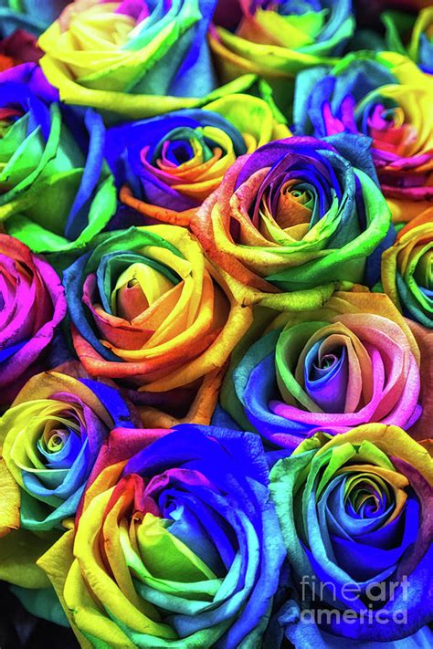 rainbow colored roses rainbow colored roses photograph by aaron choi