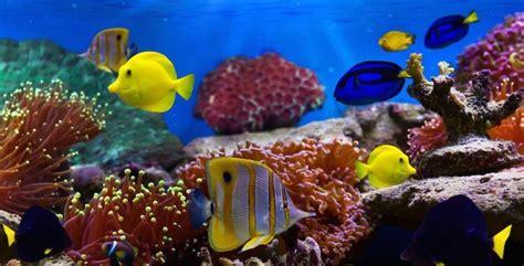 imágenes sorprendentes mundo efectos del cambio clim 225 tico en los ecosistemas marinos