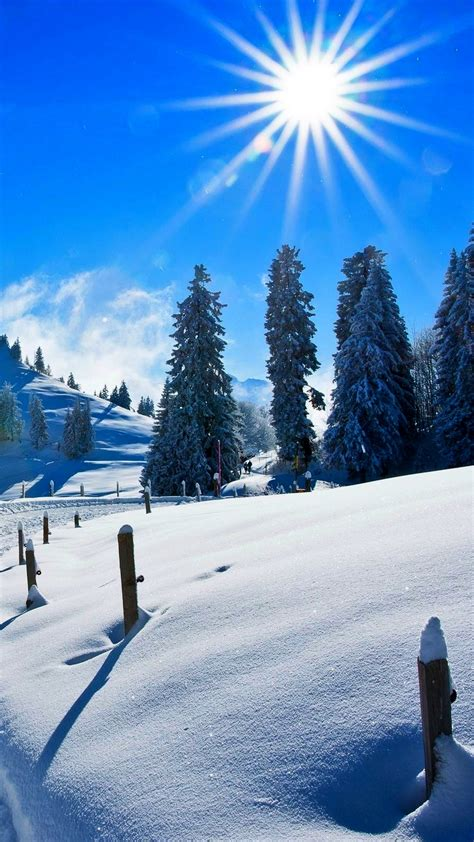 wallpaper sunny day winter snow covered pine trees