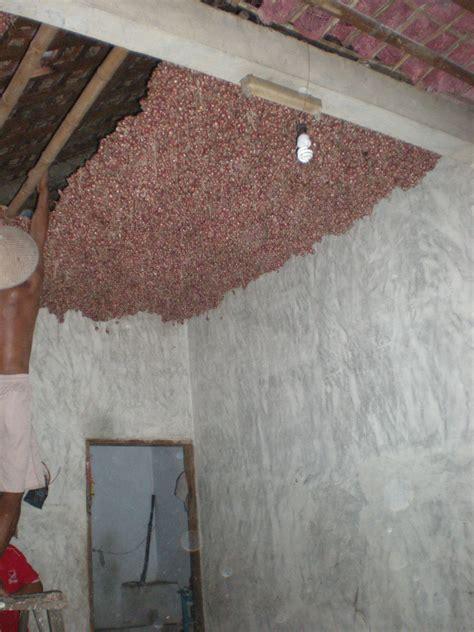 Bibit Bawang Merah Musim Hujan benih bawang merah jenis bauji 171 suplier bibit bawang