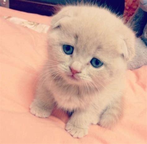 imagenes de gatitos llorando im 225 genes de gatitos hermosos y tiernos para compartir en