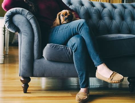 g couch free images dog canine pet sitting blue furniture
