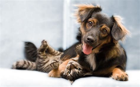 funny dog wallpapers wallpaper cave cat and dog wallpapers wallpaper cave