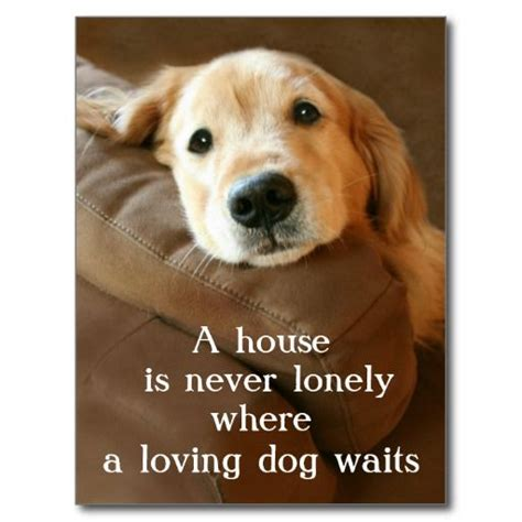 golden retriever quotes 25 best golden retriever quotes on pet quotes quotes and