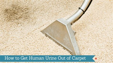 how to get urine out of carpet how to get human urine out of carpet kick bad smell