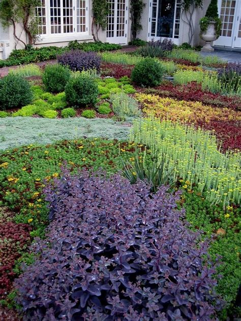 popular landscaping groundcovers and shrubs low growing sedum thyme and other ground cover plants
