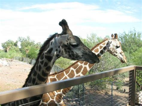 zoo lights phx az zoo az top tips before you go tripadvisor