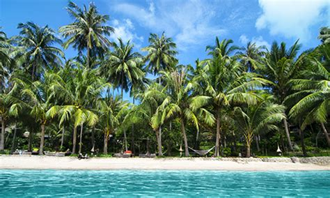 Discover Jamaica   TravelPlus