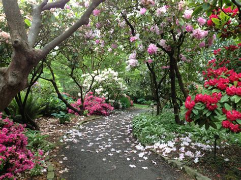 Springs Rhododendron Garden by Portland S Springs Rhododendron Garden Portland