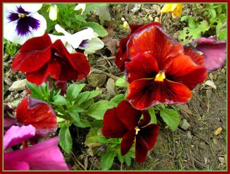 flores de jardin flores de jardin fotos de parques y jardines