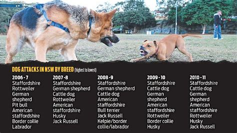 attack statistics by breed dangerous dogs esl resources breeds picture